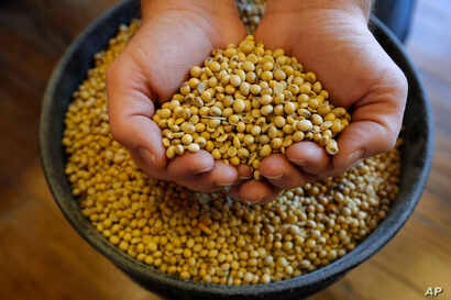 FILE - Justin Roth holds a handful of soybeans at the Brooklyn Elevator in Brooklyn, Iowa, Nov. 21, 2018.