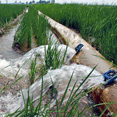 Water flows from an irrigation pipe into a rice field near Scott, Arkansas (File)
