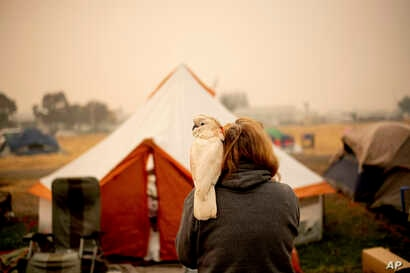 """An evacuee of the """"Camp Fire,"""" and her pet cockatoo are seen at a makeshift shelter outside a Walmart store in Chico, California, Nov. 14, 2018."""