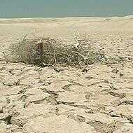 Severe drought is one of the expected consequence in Africa of climate change