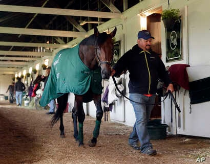 A hot walker takes Nyquist for a walk after a workout at Churchill Downs in Louisville, Ky., May 6, 2016.