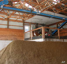 Dried solids from Brubaker's manure digester are sterilized and used as fertilizer and cow bedding
