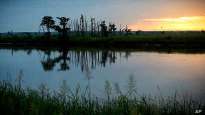 """In this July 16, 2017, photo, the sun rises on a """"ghost forest"""" near the Savannah River in Port Wentworth, Ga. Rising sea levels are killing trees along vast swaths of the North American coast by inundating them in saltwater. The dead trees in what u..."""