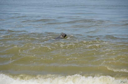 There is a large – and growing – population of grey and harbour seals in and around the Cape's waters.