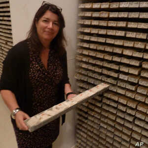 Core Repository Director Maureen Raymo pulls out a sea sediment sample, one of thousands at the archive.