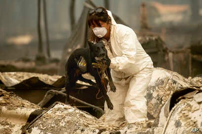 A search-and-rescue worker, looking for Camp Fire victims, carries Susie Q. to safety after the cadaver dog fell through rubble at the Holly Hills Mobile Estates, Nov. 14, 2018, in Paradise, Calif.
