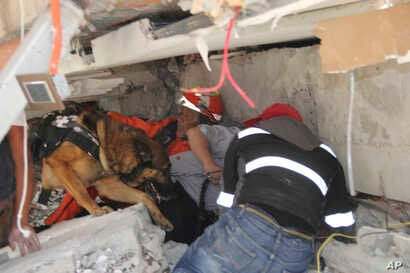 Rescue workers and a trained dog search for children trapped inside the collapsed Enrique Rebsamen school in Mexico City, Sept. 19, 2017.
