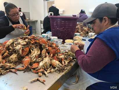 GW Hall & Son Seafood was awarded 30 H-2B visa workers but owner said 40 workers would have been ideal. (A. Barros/VOA)