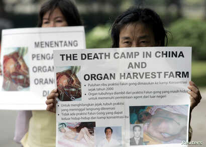 FILE - Indonesian Falun Gong followers carry placards during a protest in front of U.S. embassy in Jakarta, April 19, 2006. A group of protesters called on U.S. President George W. Bush to raise the issue of China harvesting organs from Chinese peopl...