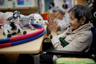 A resident claps to call 'AIBO', a pet dog robot at Shin-tomi nursing home in Tokyo, Japan, Feb. 2, 2018.