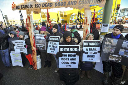 Members of People for the Ethical Treatment of Animals protest prior to the ceremonial start of the Iditarod Trail Sled Dog Race, March 2, 2019, in Anchorage, Alaska.