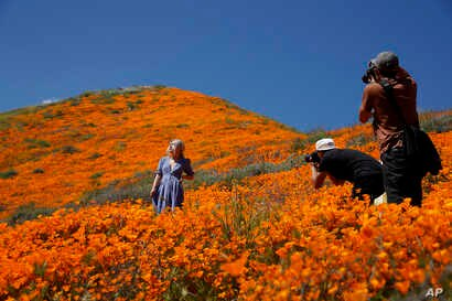 A model poses among wildflowers in bloom, March 18, 2019, in Lake Elsinore, California
