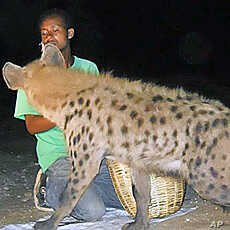 The 'hyena men' of Harar, an ancient city in eastern Ethiopia, call the animals by name, and feed them goat meat with their hands or from sticks in their mouths.