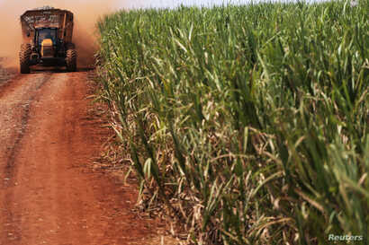 A tractor carries sugar cane on a field at the property of Grupo Moreno in Ribeirao Preto, in the northeastern region of the state of Sao Paulo, Brazil, Sept. 15, 2016.
