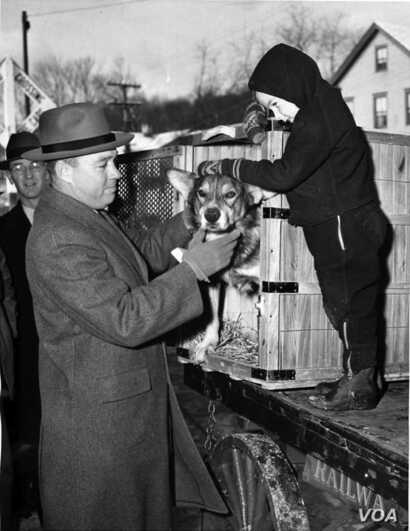 Chips returns home. John Wren was four years old when Chips came home from the war.