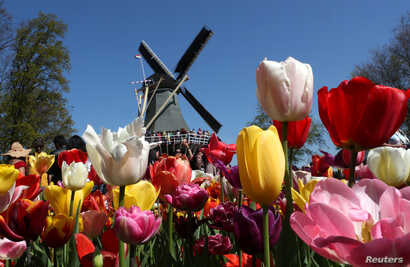 A windmill is seen in the Keukenhof garden in Lisse, Netherlands, April 19, 2019.