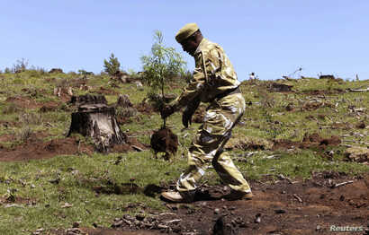 FILE - A Kenyan Wildlife Service ranger plants a seedling at the Kaptunga station of the Mau Forest complex, Jan. 15, 2010. Kenya's government planted trees after relocating about 20,000 families from the Mau forest.