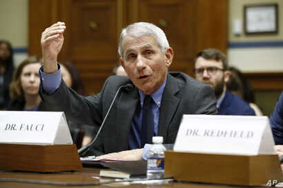 Dr. Anthony Fauci, director of the National Institute of Allergy and Infectious Diseases, testifies before a House Oversight…