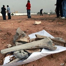 Bones pictured at the scene of a mass grave in Tripoli, September 25, 2011.