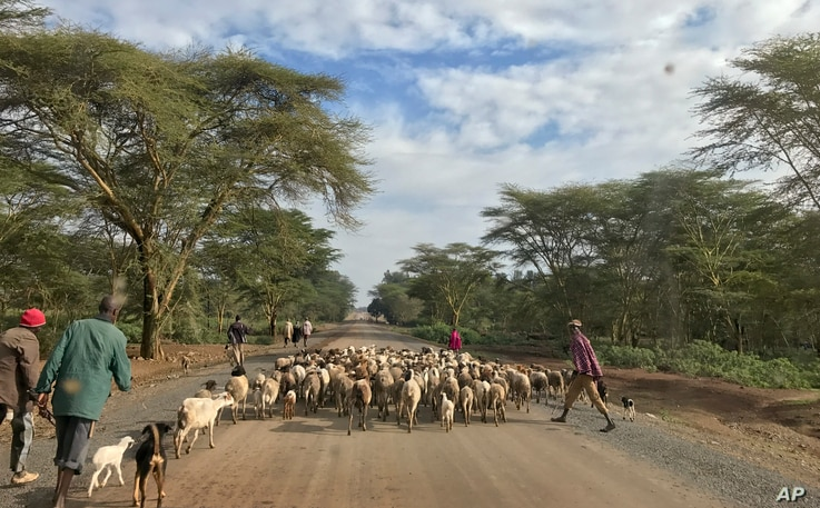 Herdsmen herd their sheep and goats along a road in Laikipia, Kenya, July 27, 2017.