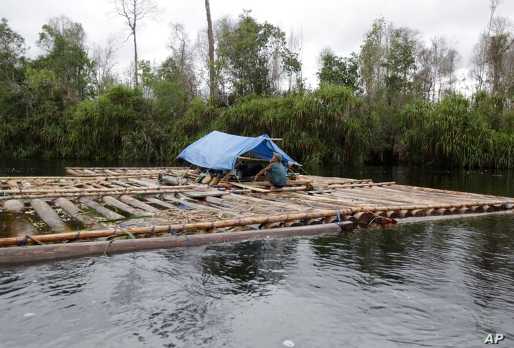 FILE - Allegedly illegal logs are moved downstream in Sungai Mangkutub, Central Kalimantan, Indonesia, Jan. 7, 2016.