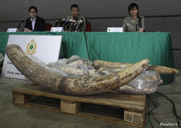 Customs and Excise Department officials address press conference following seizure of poached ivory, Hong Kong, November 16, 2012.