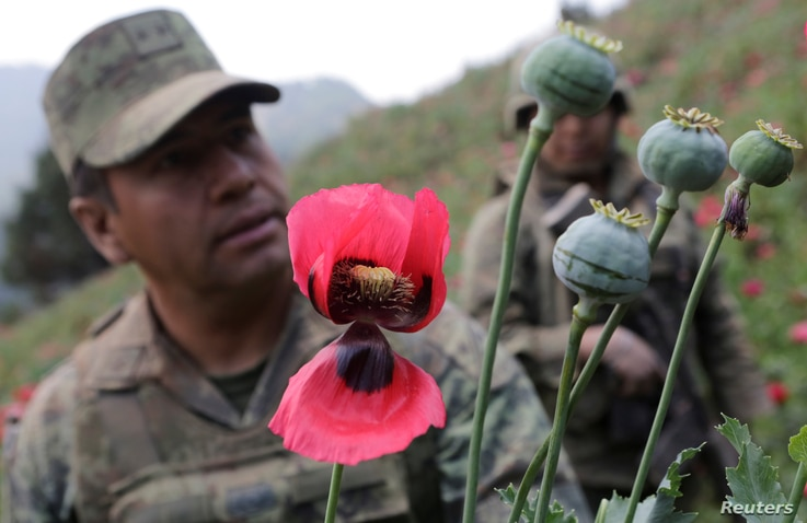 Colonel Isaac Aaron Jesus Garcia (L) speaks to Reuters next to poppy plants before a poppy field is destroyed during a military operation in the municipality of Coyuca de Catalan, Mexico, April 18, 2017.