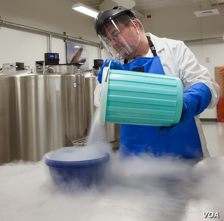 Genomic samples are stored in the Smithsonian's biorepository, a complex of sub-zero freezers that can hold up to 4 million cryo-preserved samples in perpetuity, July 2015. (Credit: Donald E. Hurlbert/Smithsonian Institution)