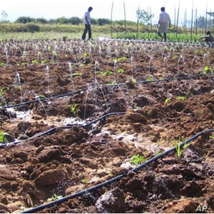 Southern Indian farmers running the Driptech irrigation system