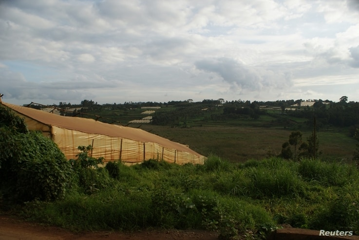 A view of greenhouses flanking the Ondiri swamp in central Kenya, May 18, 2018.