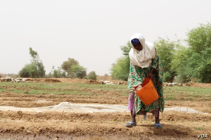 A woman waters her crops in the village of Woudourou, in the Matam region of Senegal, May 17, 2017. (S. Christensen/VOA)