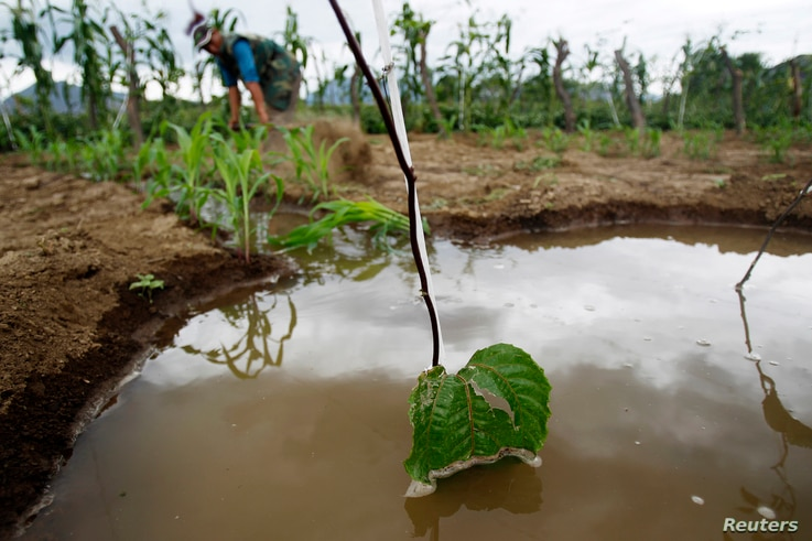 Irrigation water is seen near passionfruit crops after a rare rain in the outskirts of Olmos in Peru's northwestern region of Lambayeque, March 14, 2013.