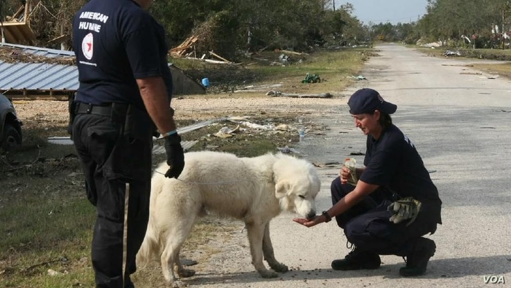 In times of disaster, pets are often left behind. (American Human Association)