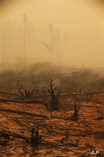 Tree trunks smolder amid the burned-down remnants of a forest outside the village of Kadanok, 90 miles southeast of Moscow, on Aug, 3, 2010. The fires in forests, fields and peat bogs came after weeks of searing heat and practically no rain.