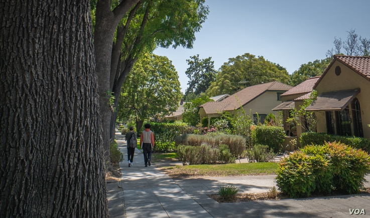 The city of South Pasadena has preserved many trees through regulations that discourage removing them.