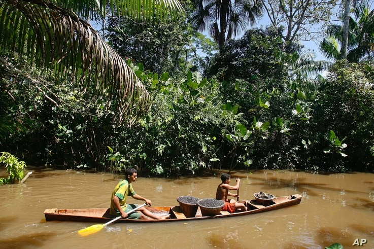 FILE - A small boat transports baskets with acai berries near Belem, northern Brazil, May 17, 2007.