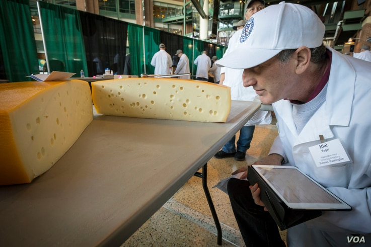 "Judges say Swiss cheeses are difficult to get right, in part because the holes – called the ""eyes"" – have to be perfectly formed on the inside, seen at the U.S. Cheese Championship in Green Bay, Wis., March 5, 2019."