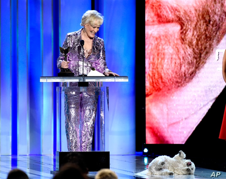 """Glenn Close, winner of the award for best female lead for """"The Wife,"""" reacts as her dog, Sir Pippin of Beanfield, rolls onstage at the 34th Film Independent Spirit Awards, Feb. 23, 2019, in Santa Monica, Calif."""
