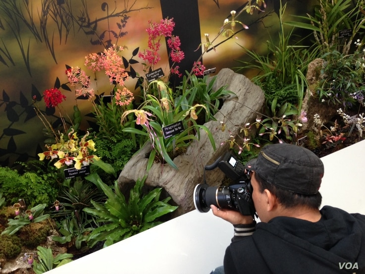 A visitor takes a photo of some of the 5,000 orchids being featured at a new exhibit at the U.S. Botanic Garden in Washington, March 8, 2016. (J. Taboh/VOA)