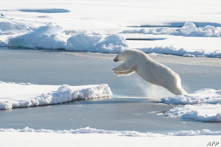 This US Coast Guard photo obtained August 24, 2015 shows a polar bear observed off Coast Guard Cutter Healy's stern, on August 23, 2015, while the cutter is underway in the Arctic Ocean in support of Geotraces. Geotraces is Healy's second science mis