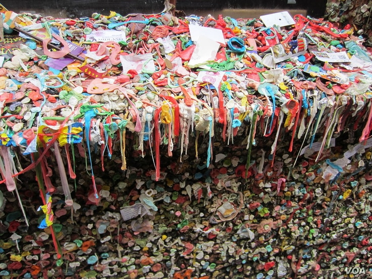The gum is up to 15 centimeters thick in some spots.