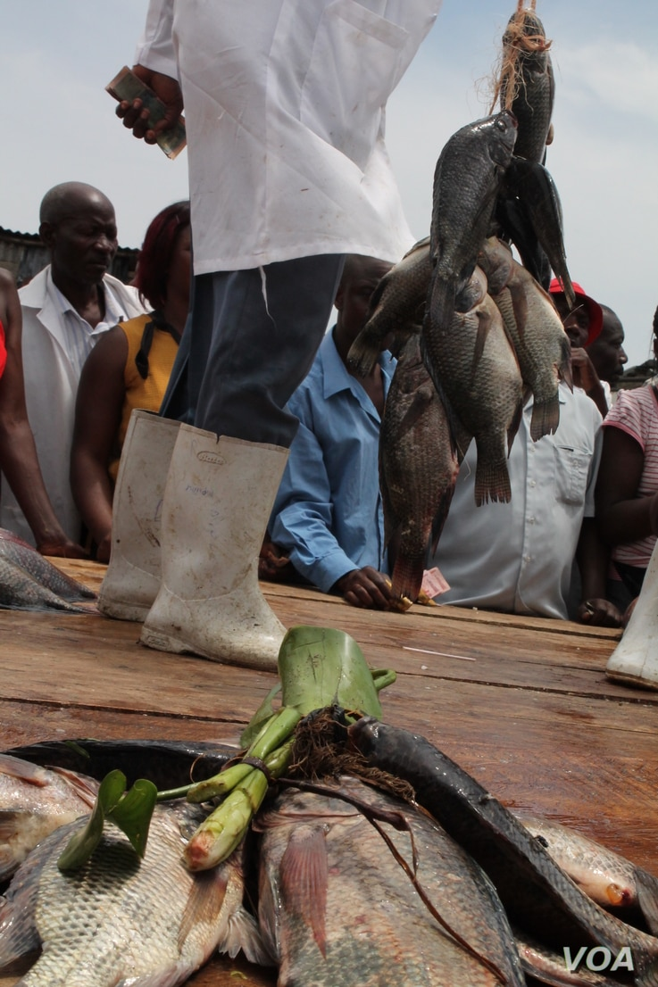 Fishermen at the Ggaba fish auction say depleted stocks are making it harder to earn a living on Lake Victoria, Sept 25, 2013. (Hilary Heuler for VOA)