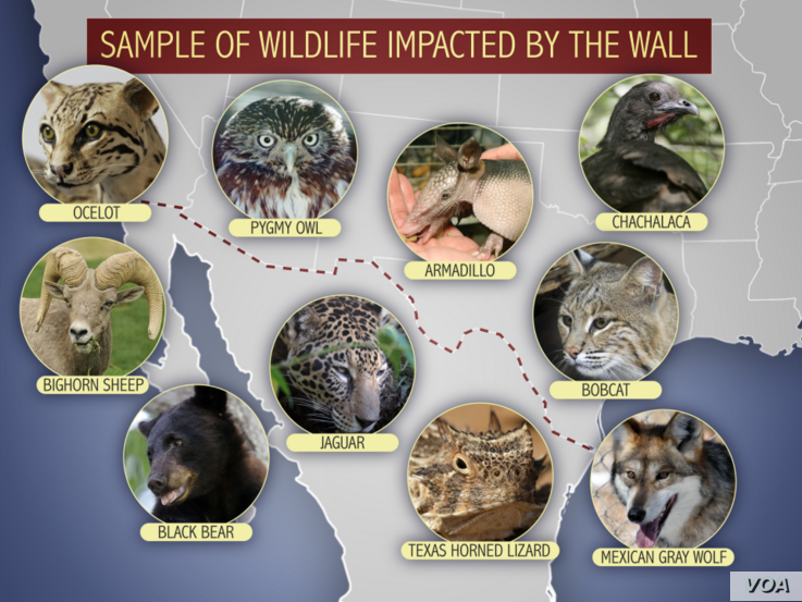 This is a sample of the wildlife that would be affected by the border wall proposed by US President Donald Trump.
