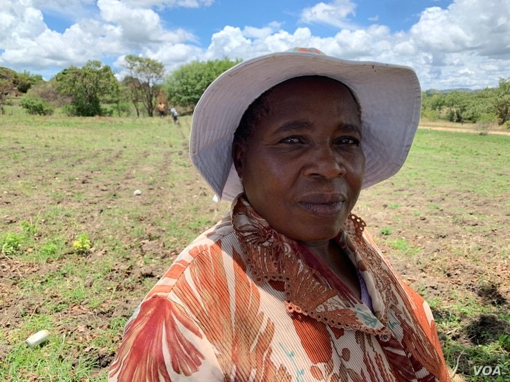 Farmer Viola Thwamba says she doesn't have an irrigation system for her corn, but for 12 years now collects dry leaves and crop stubble, once her crops germinate she mulches to keep moisture in case of dry spells.