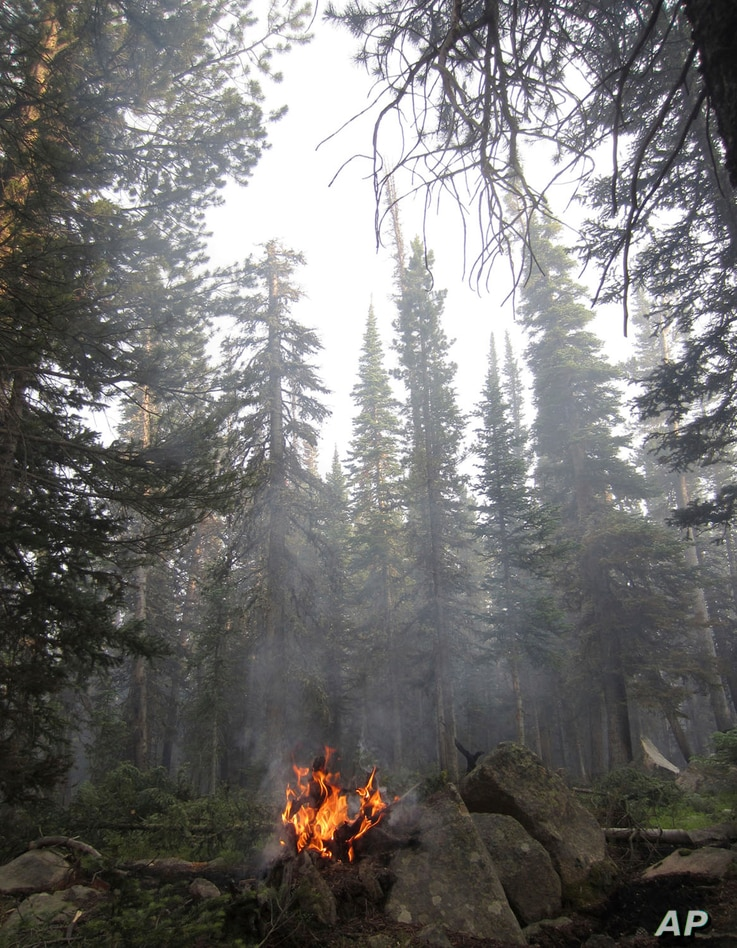 In this July 12, 2017, photo, a fallen tree burns in the Keystone fire near Albany, Wyo. The fire was burning in a dense forest of beetle-killed trees, which pose a safety hazard for firefighters because the trees topple more easily than living trees...