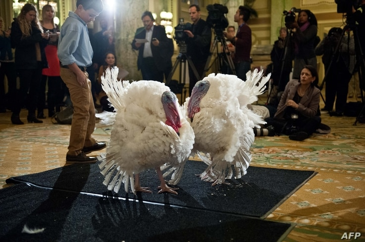Two turkeys, one named Caramel and the other Popcorn are presented to the press in Washington, DC on November 26, 2013.