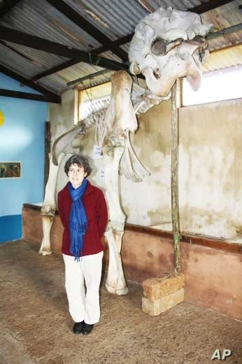 Amakhala Game Reserve's resident Zoologist Dr. Jennifer Gush stands alongside the skeleton of a big elephant bull named George who died on the park a few years ago