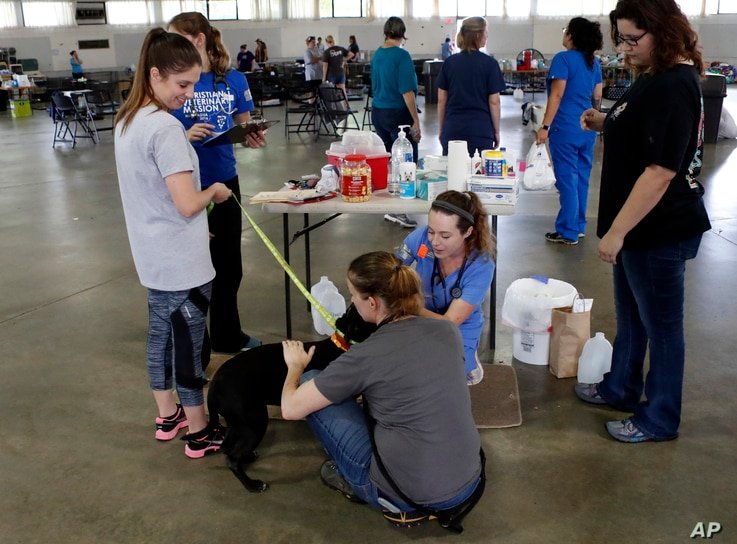 Sarah Montoya, second from right, tends to a dog in the Holshouser Building on the N.C. State Fairgrounds in Raleigh on Monday, Sept. 17, 2018.