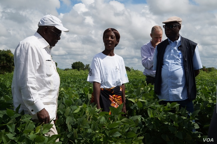 Farmer Patricia Jere stands in her soya field as she briefs IFAD president Kanayo Nwanze --left-- on how she has benefited from the RLEEP program. (Photo: Lameck Masina for VOA)