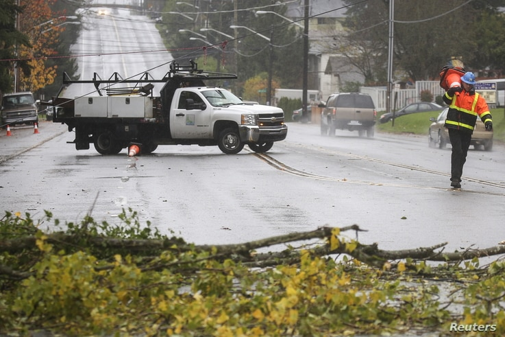 A worker prepares to place cones around a downed tree that damaged power lines and blocked a road during a strong storm in Seattle, Washington, Nov. 17, 2015.